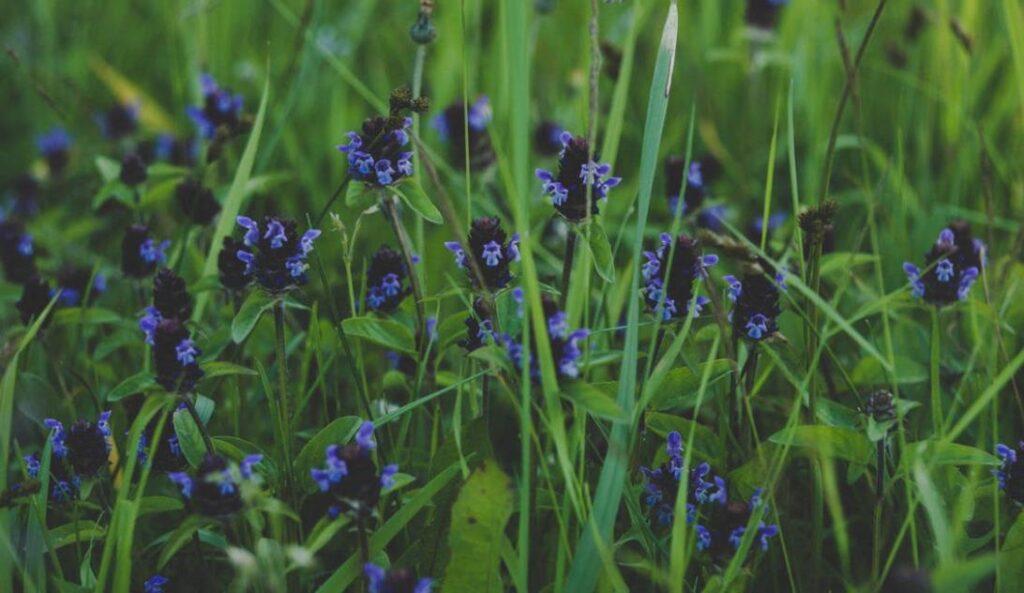 Wildblumen_2